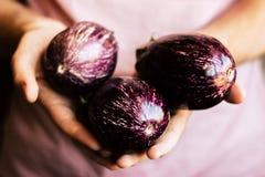 Melanzane organiche fresche in mani del ` s dell'uomo Fotografia Stock Libera da Diritti