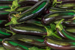 Melanzane organiche in un mercato libero al giorno Immagine Stock