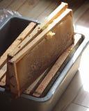 Melari dell'alveare durante il Honey Harvest Immagini Stock