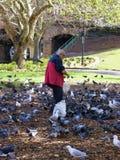 Feeding the birds stock photos