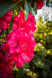 Melbourne-botanischer Garten stockfotografie