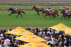 Melbourne Cup festival events November 01, Royalty Free Stock Photography