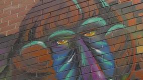 Melbourne graffiti monkey corner stock video