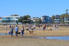 Melbourne-Hundegehender Strand Australien Stockfotos