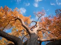 melbourne jesieni drzewo zdjęcie stock