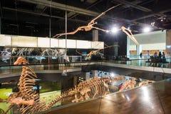 Melbourne museum Arkivbild
