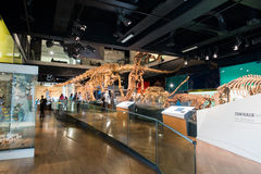 Melbourne museum Royaltyfri Fotografi