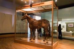Melbourne Museum Phar Lap Stock Image