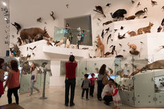 Melbourne Museum Royalty Free Stock Image