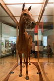Melbourne museumPhar varv Royaltyfri Fotografi