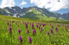 Melchsee-Frutt, Suíça Imagem de Stock Royalty Free