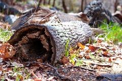 Melden Sie das Holz an lizenzfreie stockfotografie