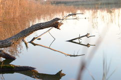 Melden Sie den Fluss an Lizenzfreie Stockfotografie