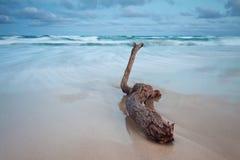 Melden Sie den Strand an Stockfotografie