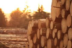 Melden Sie den Waldweilesonnenuntergang an lizenzfreies stockbild