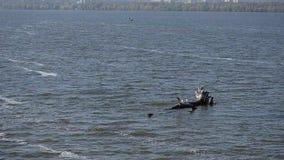 Melden Sie die Mitte von Fluss mit Wellen an stock footage