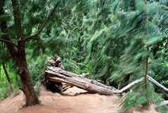 Melden Sie einen Wald an Lizenzfreie Stockfotos