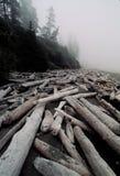 Meldet nebeligen Strand an stockbilder