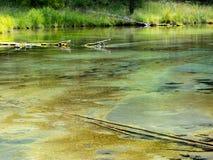 Meldet seichtes klares Wasser an stockbilder