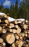 Meldet Wald an Lizenzfreies Stockbild