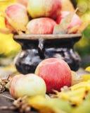 Mele con le foglie di giallo di autunno in giardino Fotografia Stock Libera da Diritti