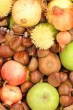mele dei melograni delle castagne del kiwi grandi Fotografia Stock