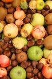 mele dei melograni delle castagne grandi e molti frutti di autunno Fotografie Stock