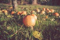 Mele di autunno sulla terra in autunno Fotografie Stock Libere da Diritti