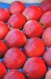 Mele di colore rosso di Packd Fotografia Stock
