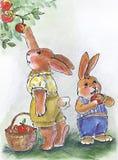 Mele di raccolto del coniglio di mamma Fotografie Stock
