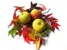 Mele e fogli di autunno Immagine Stock