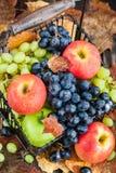 Mele ed uva mature fresche di autunno Fotografia Stock Libera da Diritti
