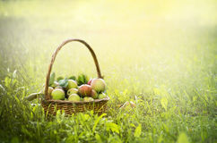 Mele fresche nel canestro sull'erba verde e sullo sfondo naturale, fine su fotografia stock