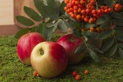 Mele mature e frutti della cenere di montagna rossa con le foglie verdi Immagini Stock