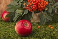 Mele mature e frutti della cenere di montagna rossa con le foglie verdi Immagini Stock Libere da Diritti