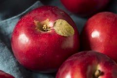 Mele organiche rosse di Macintosh fotografia stock libera da diritti