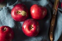 Mele organiche rosse di Macintosh fotografie stock libere da diritti