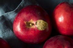 Mele organiche rosse di Macintosh immagine stock libera da diritti
