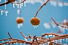 Mele in pioggia congelantesi Immagine Stock
