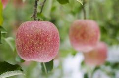 Mele rosse fresche Fotografie Stock