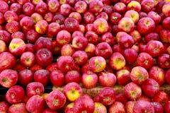 Mele rosse fresche Fotografia Stock