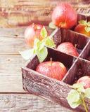 Mele rosse mature sulla scatola di legno su una tavola rustica, fuoco selettivo Immagine Stock