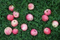 Mele a strisce rosa sull'erba verde Immagini Stock