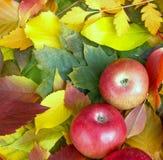 Mele sui fogli di autunno Immagini Stock Libere da Diritti