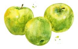 Mele verdi con i rami nello stile dell'acquerello fotografie stock libere da diritti