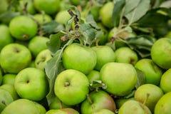 Mele verdi, primo piano un grande gruppo di mele verdi in una fila Fotografia Stock