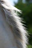 Melena de un caballo Fotografía de archivo libre de regalías