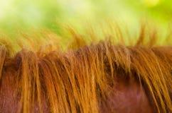 Melena de un caballo Fotos de archivo