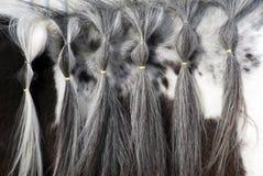Melena del caballo Imagenes de archivo
