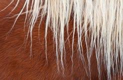 Melena del caballo Fotografía de archivo libre de regalías